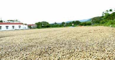 Quy trình sản xuất chế biến cà phê sạch đúng chuẩn nhất