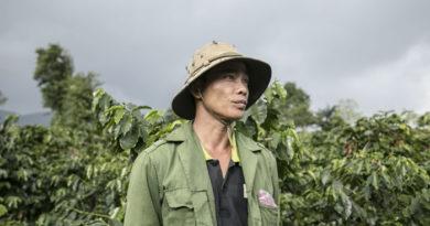 Quảng Trị: Tăng thu nhập từ cây cà phê