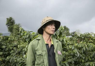 Quảng Trị: Tăng thu nhập từ cây cà phê?