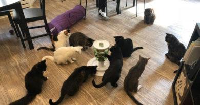 """Đi cà phê mèo tốn thêm 720 nghìn tiền chữa bệnh vì bị bọ nhảy đốt """"tan nát"""" tay"""