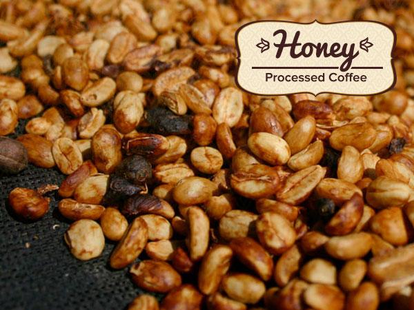"""Chế biến cà phê theo phương pháp """"mật ong"""" (honey process coffee)"""